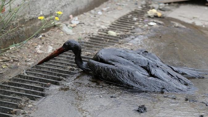 Bataklığa saplanan leylek Büyükşehir'le hayata döndü
